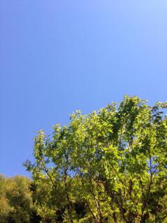 Bule_sky